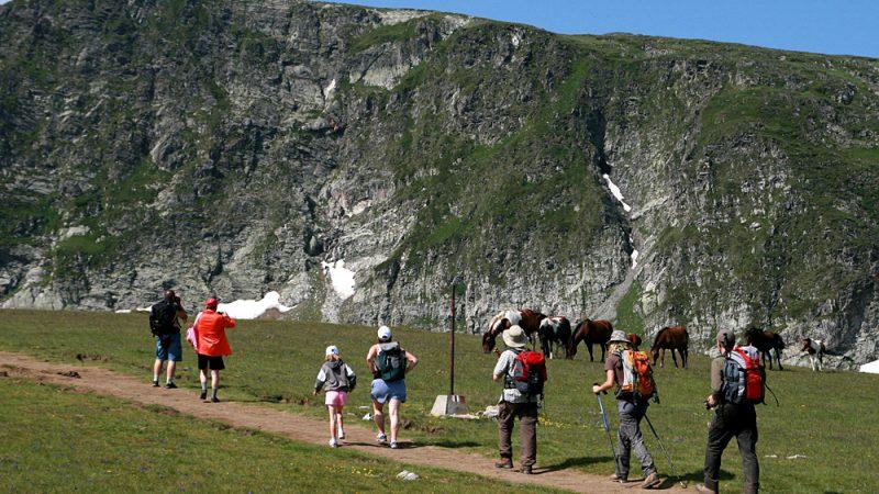 WIld horses Rila mountain